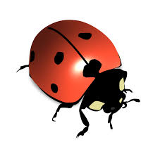 l u0027 is for ladybird