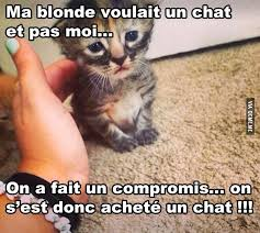 Chat Meme - un chat â quã bec meme