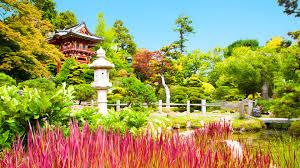 Botanical Gardens Golden Gate Park by San Francisco Golden Gate Park Youtube