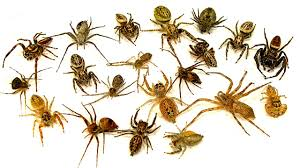 how to kill 20 spiders easy wasps the ultimate spider control