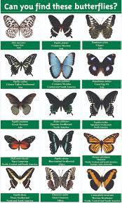butterflies plants butterfly species finder