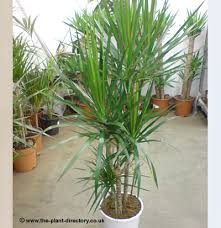 apartment plants offices top fresh air house plants home of