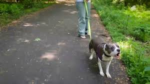 dog barks when we leave training to help calm a dog who barks and lunges on leash youtube