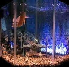 wars aquarium geeking out aquarium wars