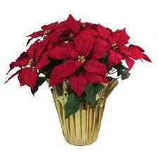 Christmas Plants Christmas Plants U0026 Flowers Indoor Christmas Decorations The