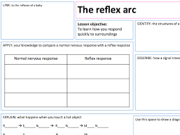 Describe A Reflex Action The Reflex Arc Lesson Presentations And A3 Lesson Map By