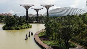 solar powered supertrees at singapore s gardens by the bay cnn