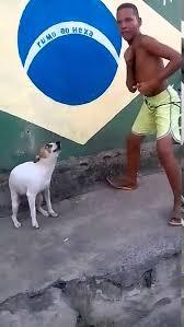 Dancing Dog Meme - brazil dog dance พฤต กรรม pinterest dancing dog and dog pictures