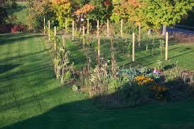What Every Home Needs A Backyard Vineyard Garden Pinterest - Backyard vineyard design
