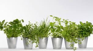 plante aromatique cuisine astuce ciseler les herbes aromatiques