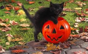 black cat halloween wallpaper free high definition wallpapers best impressive full hd