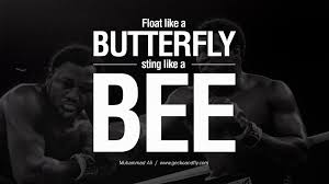 float like a butterfly and sting like a bee hd nature wallpaper