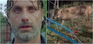 Rick Grimes Crying Meme - the walking dead s cgi deer looked really bad this week metro news
