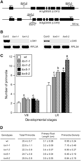 oxylipins produced by the 9 lipoxygenase pathway in arabidopsis