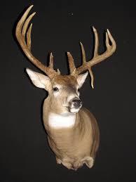 deer head cliparts co