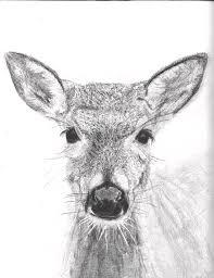 drawn deer female deer pencil and in color drawn deer female deer
