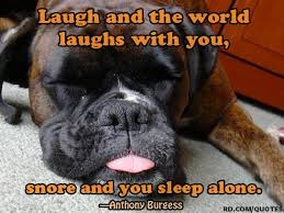 boxer dog sayings 22 best snore humor images on pinterest funny stuff snoring
