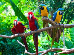 birds wallpaper 251