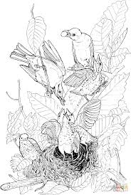 american robins feeding their babies coloring page free