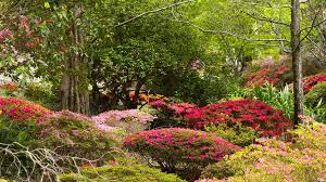 Mt Lofty Botanic Gardens South Australia Mount Lofty Botanic Garden