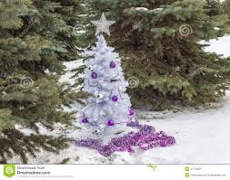 little white christmas tree sitting among green spruce trees stock