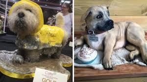 dog cakes talented baker wows with lifelike dog cakes rover