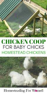 chicken coop for baby homesteading for women