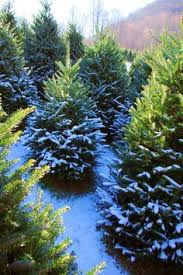 on average over 2 000 christmas trees are planted per acre o