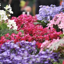 Homebase Garden Chelsea Flower Show 2011 Thgd