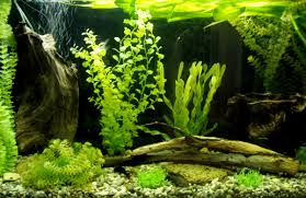 Aquascape Design Ideas For Amazing Aquarium Design Room Furniture Ideas