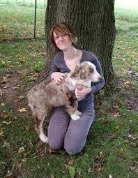 australian shepherd size chart aussiedoodle breeders at pecan place poodles u0026 poos