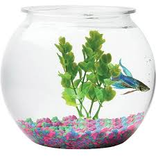 Beta Fish In Vase Bettasmart Better Betta Fish Care