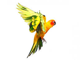 66 best parrot images on pinterest animals drawings and paintings