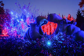 when does the lights at the toledo zoo start toledo zoo s lights before christmas again nominated for national