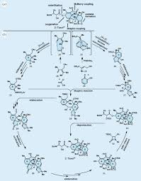 organic synthesis the art and science of replicating the