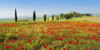 Best Spring Flowers - the best places in europe to see spring flowers travelzoo uk
