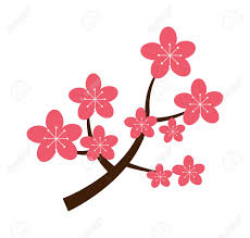 cherry branch with blooming flowers vector