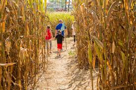 how to make a corn maze hgtv