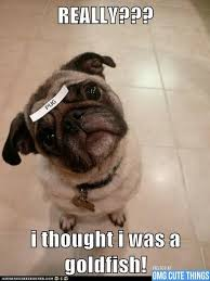 Memes Makers - images of images of dog memes puppies photos omgcute dogs wallpaper