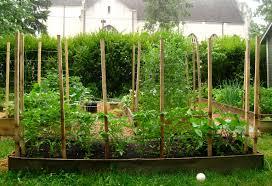 33 best images of tomato garden trellis ideas tomato cage