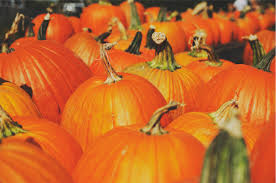 spirit of halloween hours the best things to do for halloween in las vegas las vegas monorail