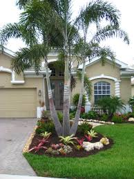 foxtail palm typical florida landscaping beautiful
