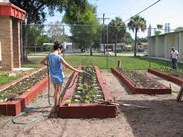 Vegetable Gardens In Florida by Getting Your Florida Garden Growing Wgcu News