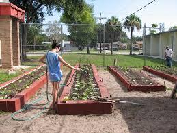 getting your florida garden growing wgcu news