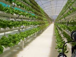 Hydroponics Vegetable Gardening 137 best hydroponics images on pinterest hydroponic gardening