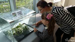 touch daegu bongmu butterfly sanctuary museum with min hee