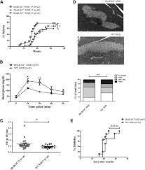 irak m deficiency promotes the development of type 1 diabetes in