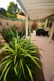 striped plants tropical patio stained concrete covered patio