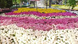 Beautiful Garden Images 4k Most Beautiful Garden Flower Festival In Chiang Mai Thailand