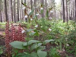 Gardening Zones Canada - 105 best for my garden zone images on pinterest flower gardening
